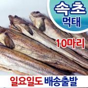 속초 건조 먹태 10미 43-53cm